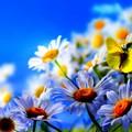 Primavera in anticipo, Coldiretti: «Disastrosi gli effetti sui campi»
