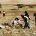 """""""A spasso col pastore """", alla scoperta della Murgia minervinese"""