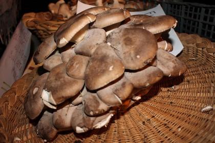 Sagra del fungo cardoncello Minervino